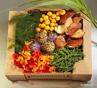 Philosophically potent: A forage box. - GENE LEE/FORAGESF