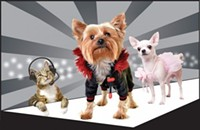 Puppies to Walk the Catwalk at SPCA