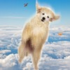 Raining Cats and Dogs: Matt Saincome Investigates the Airline Industry's Woeful Record of Protecting Pets in Flight
