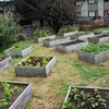 The Year Urban Farming Busted Out