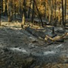 Rim Fire: Images of the Aftermath