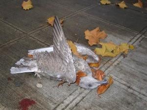 deadbird1.jpg