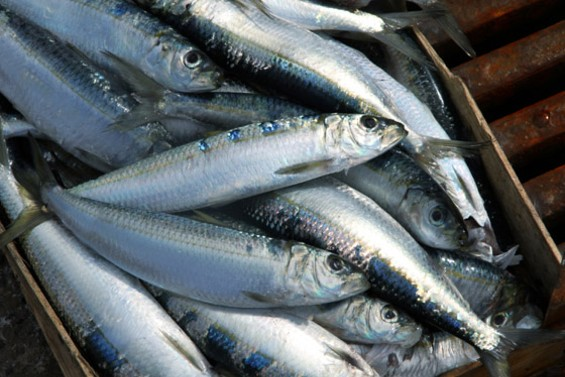 Sardines are an anytime food.