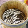 Fresh Herring Fishery off to Slow Start