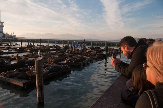 Sea lions hard at work - BETH LABERGE