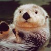 Sea Otters More Important than Roosevelt: SFGovernmentInAction 9.17-21