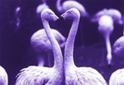 See plenty of lovebirds at  the S.F. Zoo's Valentine's Day Sex Tour.