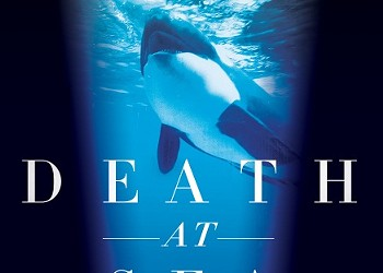 Shamu Is Out to Get You: <em>Death at SeaWorld</em> Author on Why Killer Whales Kill