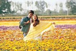 Singin' in the Sun: Shahrukh Kahn and - Preity Zinta frolic in the flowers.