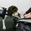 Dog Enforcement Agency: The Government's Illegal-Food Detectors Sniff Among Us