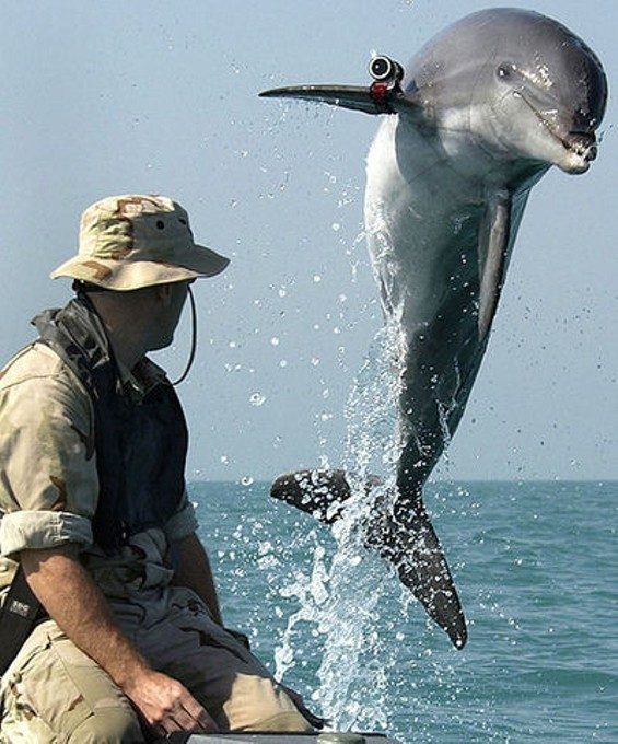 Smile! You're on Dolphin Camera. - JOE ESKENAZI