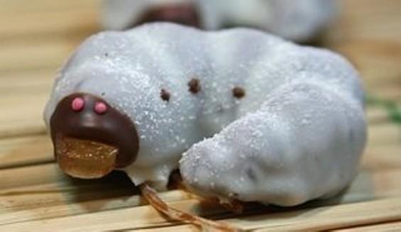 beetle_larva_chocolate.jpg