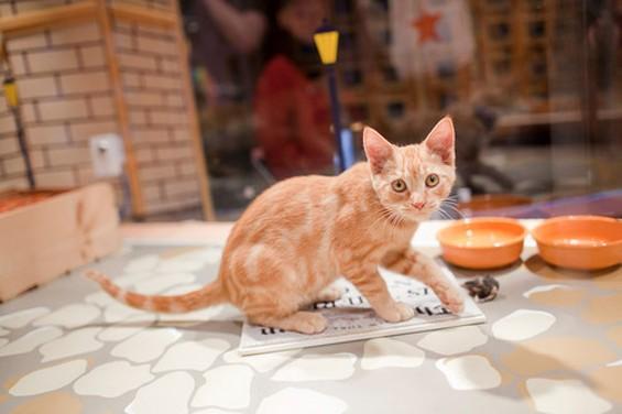 orange_cat_spca_thumb_500x333.jpg