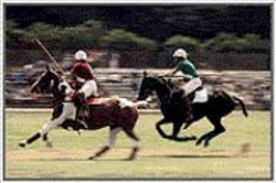PHILIP  MEEKIN - Stick-wielding polo players.