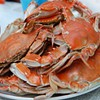 Stop Eating Seafood, Say Topless Mermaid-Costume-Wearing PETA Members
