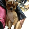 Animal Care and Control Offers Reward to Catch Person Who Beat, Sexually Abused Dog