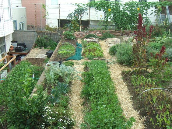 The backyard garden produces as many as 25 varieties of herbs and salad greens. - LITTLE CITY GARDENS