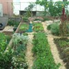 Urban Farmers Little City Gardens Planning a Move to a Bigger Plot