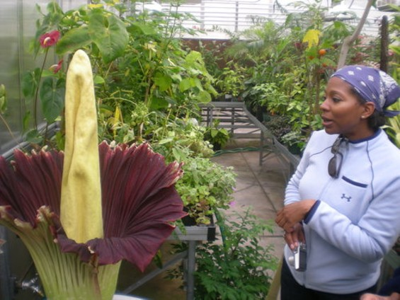 The corpse flower actually emits some of the compounds secreted by decaying flesh -- as San Franciscan Dana Davis could assure you - JOE ESKENAZI