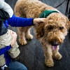 SFO Calls on Therapy Dogs to Help Stressed Out Travelers This Holiday Season