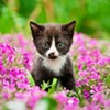 The Exhi-kitten-ist: Kitty Crime, Grumpy Cat, Keeping Felines Cool and More