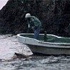 <i>The Cove</i> expertly exposes the horrific treatment of dolphins
