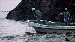 The infamous cove, where dolphins are culled for export or killed.