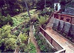 The Japanese Terrace Garden in Sea Cliff.