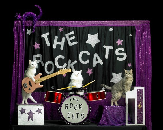 The Rock Cats - THE ACRO-CATS