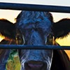 Burgers Are Ending the World, Says <em>Cowspiracy</em>