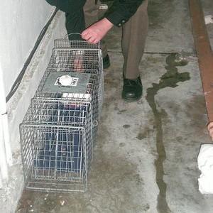 The trap is baited... - JOE ESKENAZI