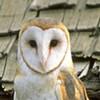 Palace of Fine Arts Has New Tenants -- Barn Owls