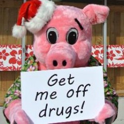 This is what a pig on drugs looks like