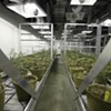 End of the Growhouse: S.F. Is the Only City in California to Permit Indoor Grow Facilities, and They're Huge