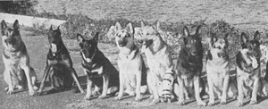 dogs_sfpl.jpg