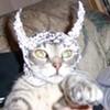 Tin Foil Hat Contingent Shut Down Sebastopol WiFi