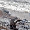 Top Five Bay Area Oil Spills