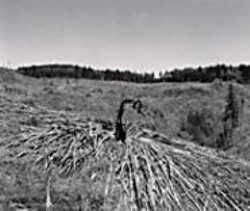 """ROBERT  ADAMS - """"Turning Back"""" confronts the devastation of - clear-cutting."""