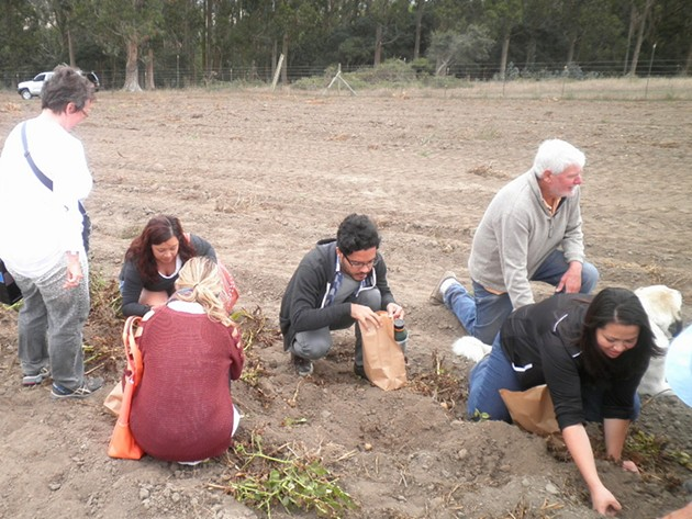 Tour members dig for potatoes at Little Organic Farm. - ERIC S. BURKETT