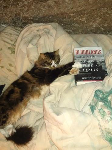 Eugin the cat loves roaming and reading.