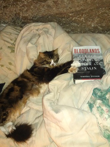 Eugin the cat loves roaming and reading.