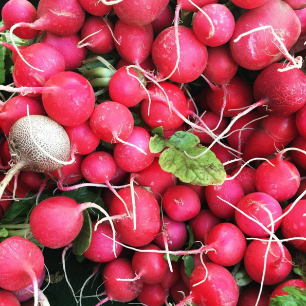 Radishes, the perfect late-winter pop of color. - INSTAGRAM/CUESA