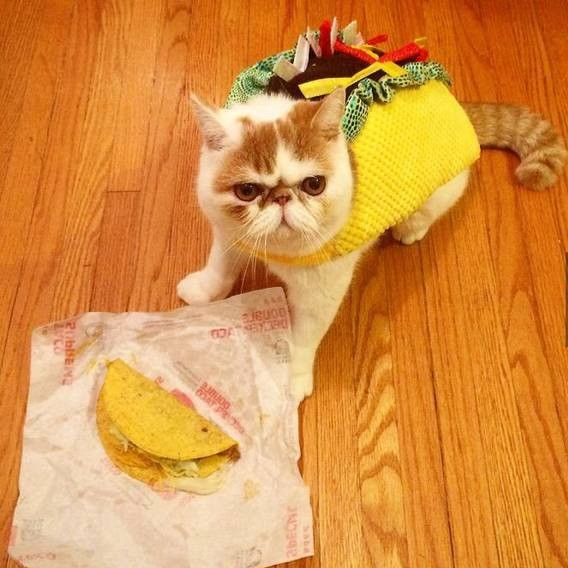 Tacocat: All the personality of Grumpy Cat, plus it's a palindrome.