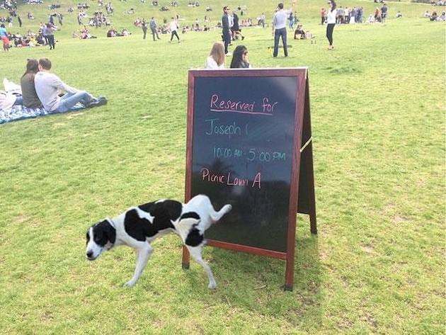 The overwhelming sentiment. - ORIGINAL PHOTO: KEVIN MONTGOMERY. DOG PHOTOSHOP JOB: TODD STANDISH.