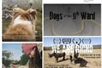 Animal Film Festival on Tour