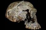 The Origins of the Genus Homo