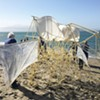 Mechanical Animals: Theo Jansen's Strandbeests