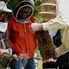 Urban Beekeeping? Urban Beekeeping!