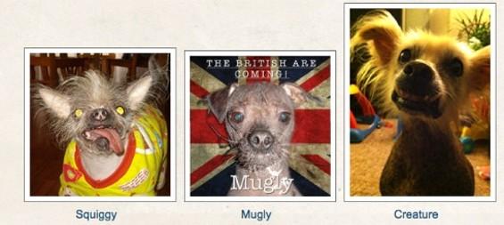 VIA WORLD'S UGLIEST DOGS/MARIN COUNTY