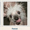 Vote for the World's Ugliest Dog